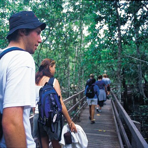 Cape Tribulation & Daintree Tour Overnight
