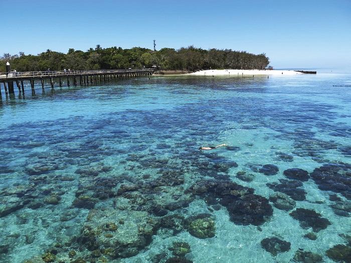 Green Island Snorkelling