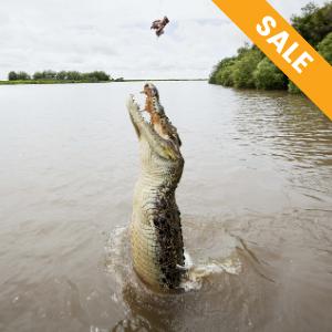 Jumping Crocodiles Tour from Darwin