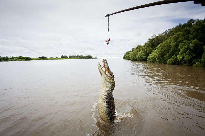Jumping Crocs