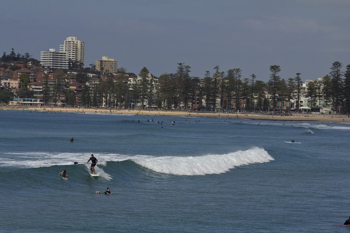 Surfing Manly