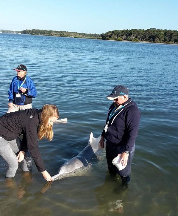 Dolphin Feeding, Fraser Island