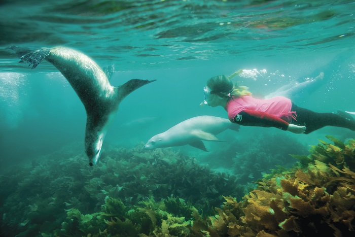 Swimming with Sealions, Seal Cove