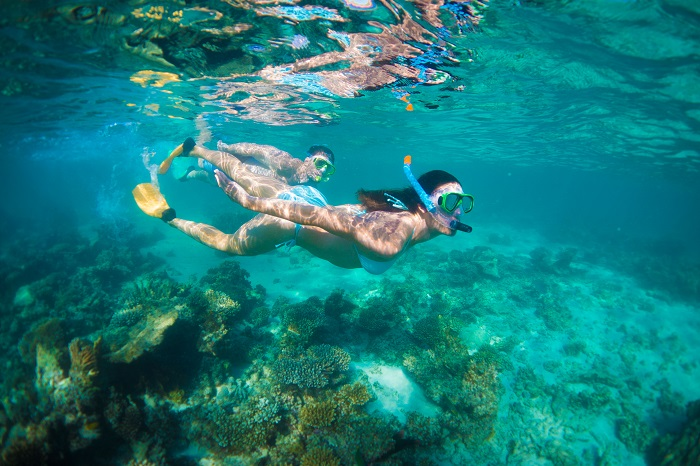 Snorkelling Coral Coast