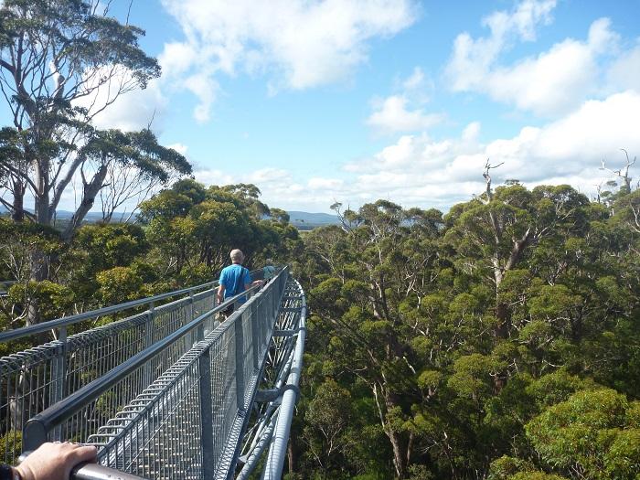 Valley of the Giants, Tree Top Walk