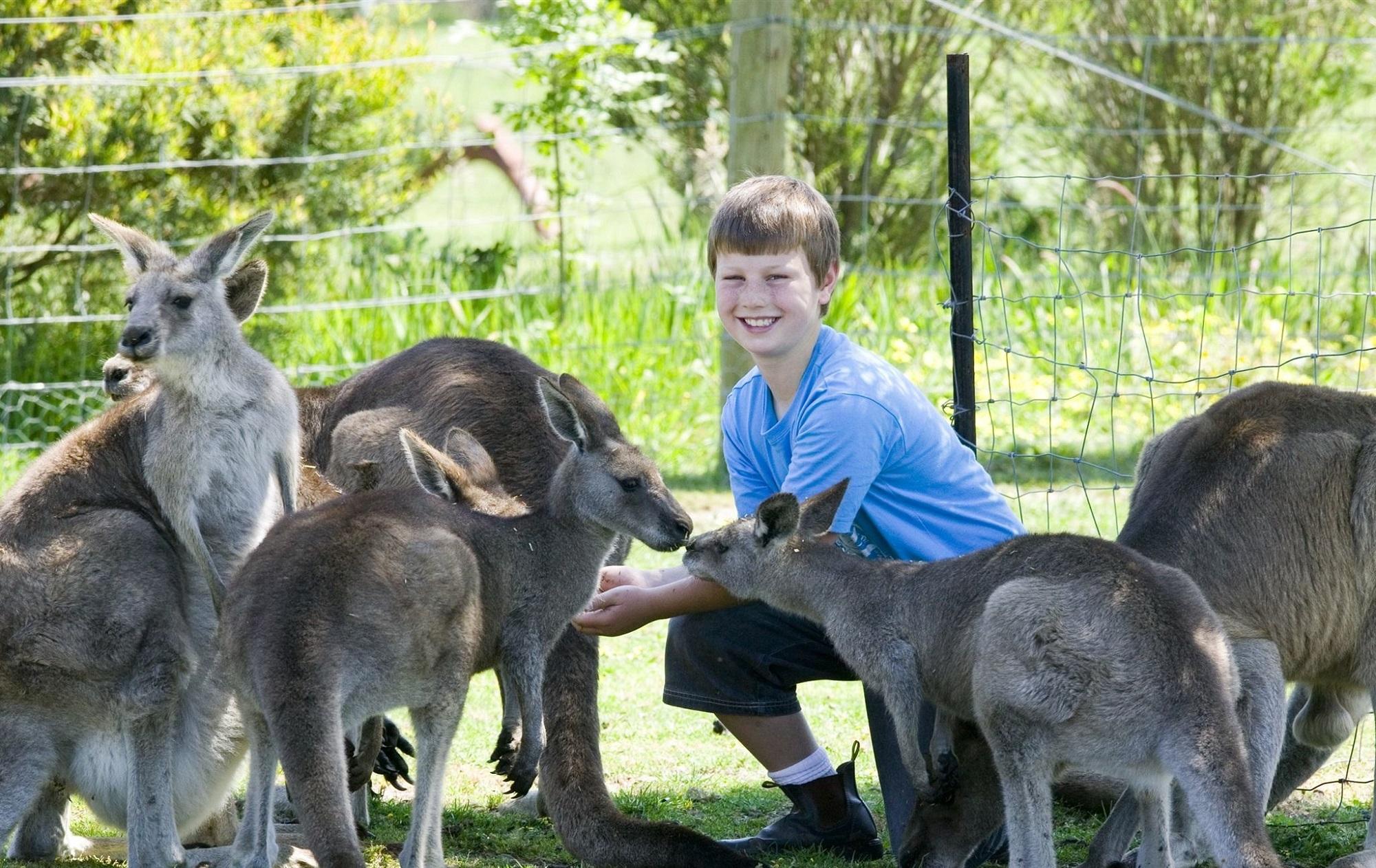 Animal Encounters and Mini-Golf at Maru Wildlife Park