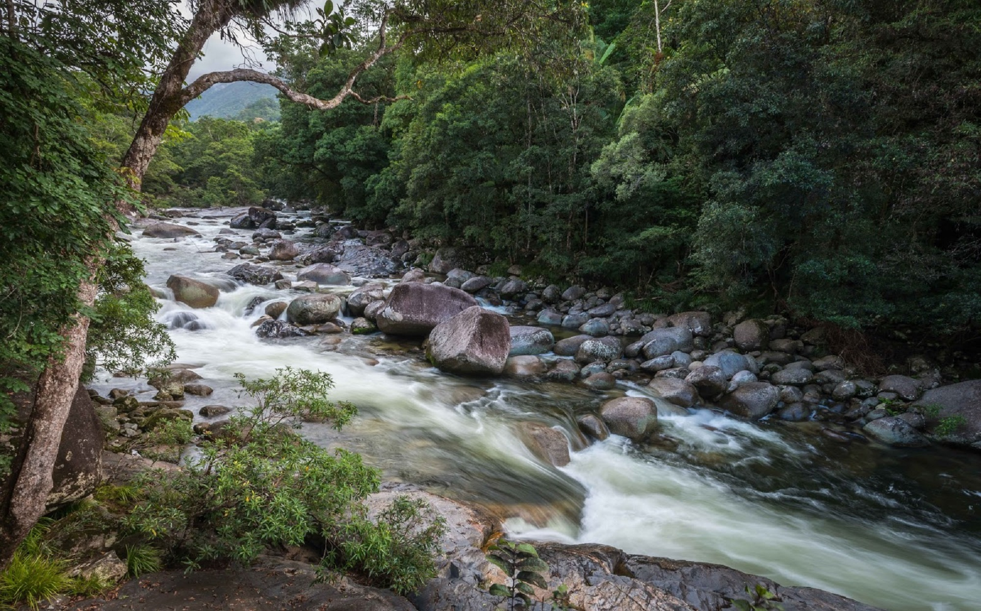 Indigenous Culture and Lush Landscapes at Mossman Gorge