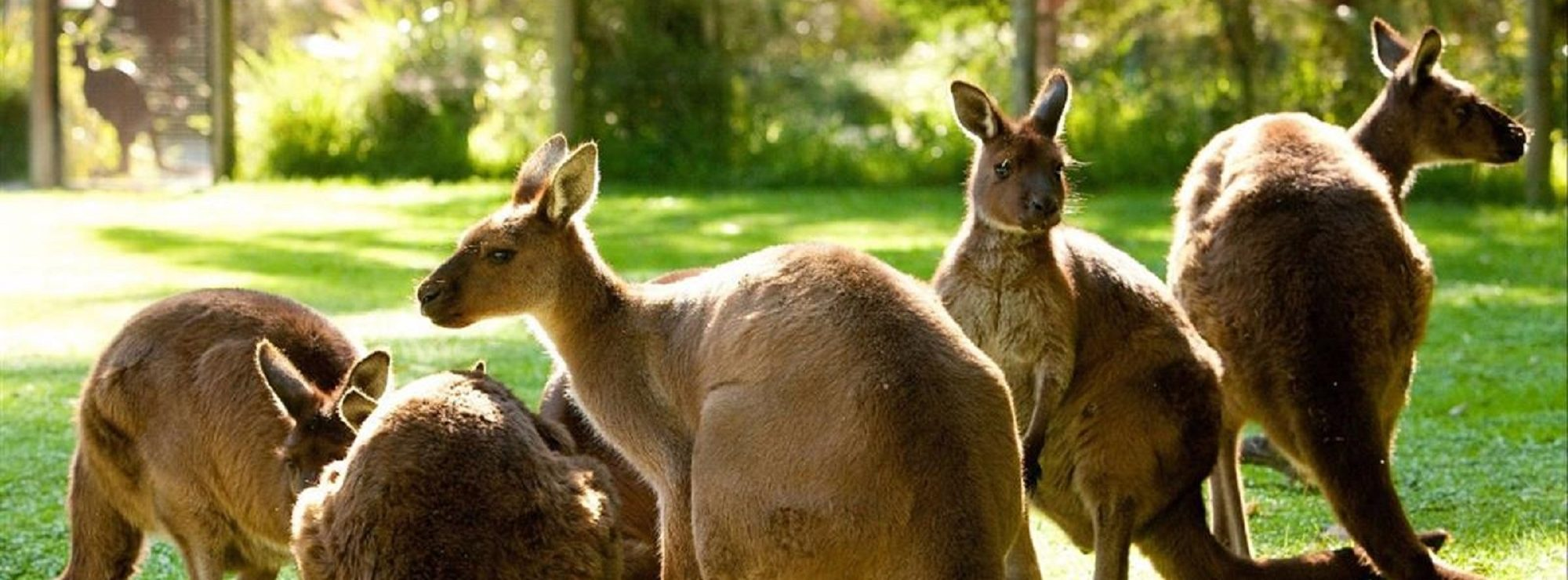 Healesville Wildlife Sanctuary: Taking the Puffing Billy Tour