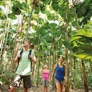 1 Day Cape Tribulation Tour with Port Douglas