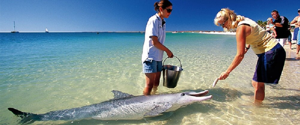 See Australia I Tips & Articles about Australia and Top