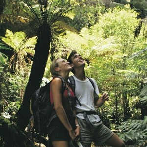 2 Day Blue Mountains, Hunter Valley and Port Stephens Tour