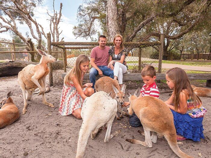 Experience Australia's Animal Life at Caversham Wildlife Park