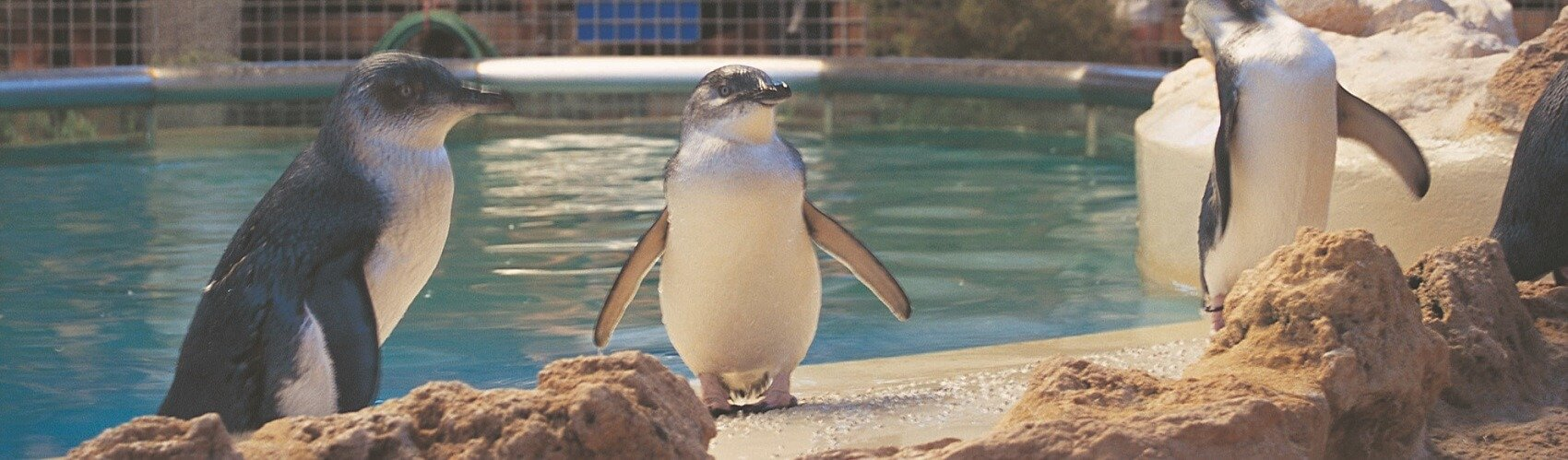 Penguin Island Tour from Perth Penguin Experience