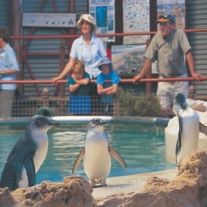 Penguin Island Tour from Perth with Caversham Wildlife Park