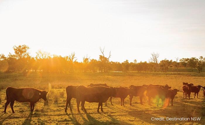 Farm in Wagga Wagga