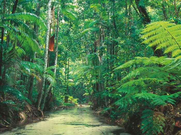 The Plants and Animals of Fraser Island