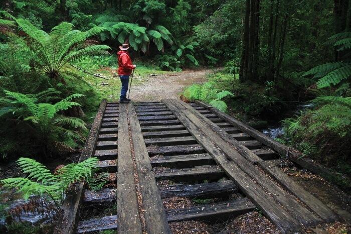 Montezuma Walking Track