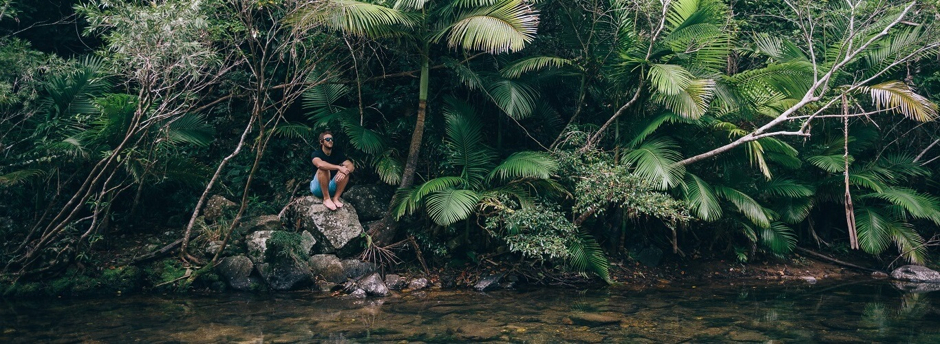 Airlie Beach Guided Walking Tour rainforest