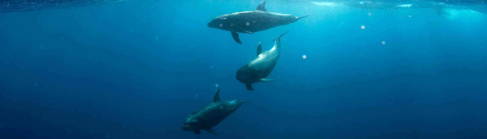 A guide to dolphin encounters in Australia