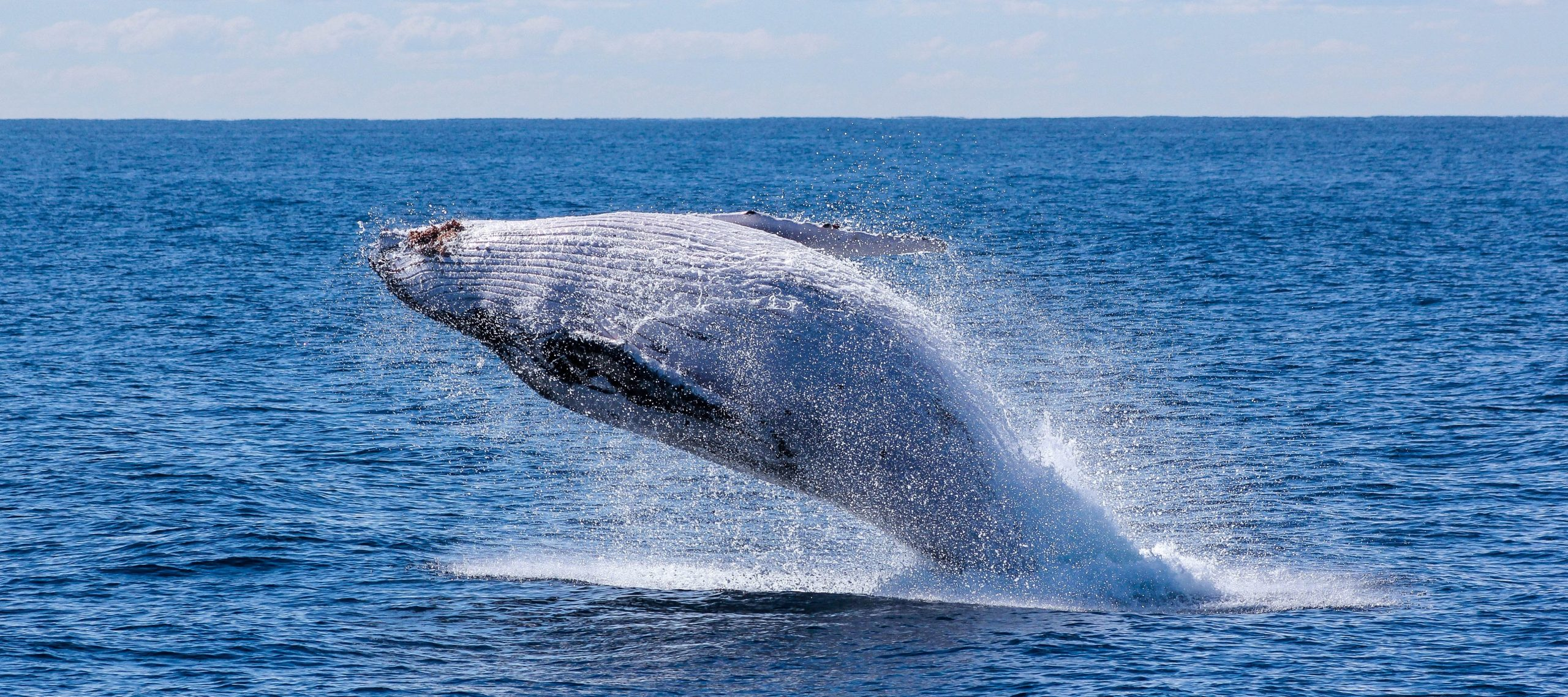 The Best Places for Whale Watching in Australia