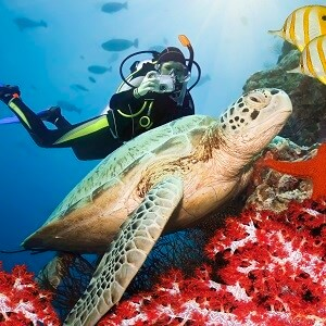 2 Day Great Barrier Reef Liveaboard Tour