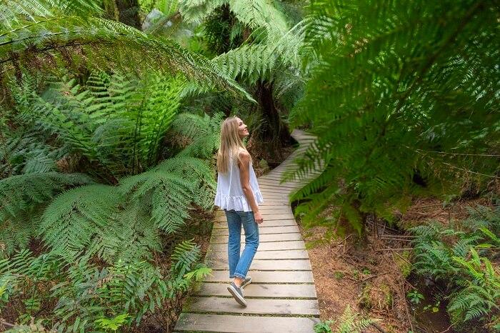 Otway Rainforest