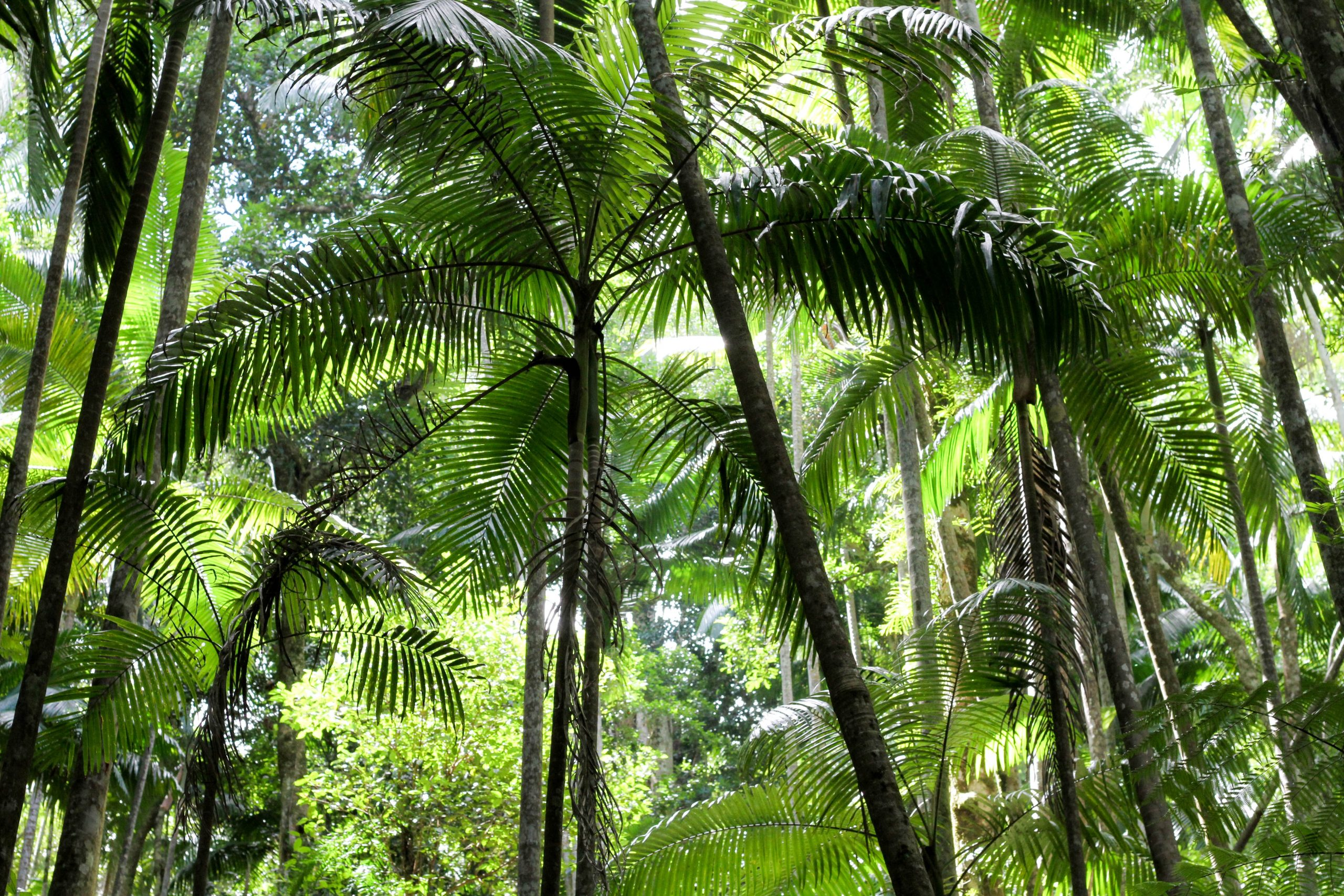 Why you should visit Whitsundays' Conway National Park
