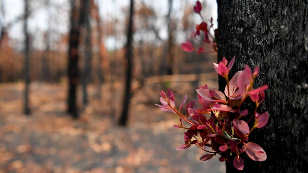 Information about the Bushfires