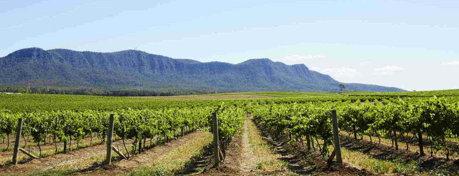 Hunter Valley Tours