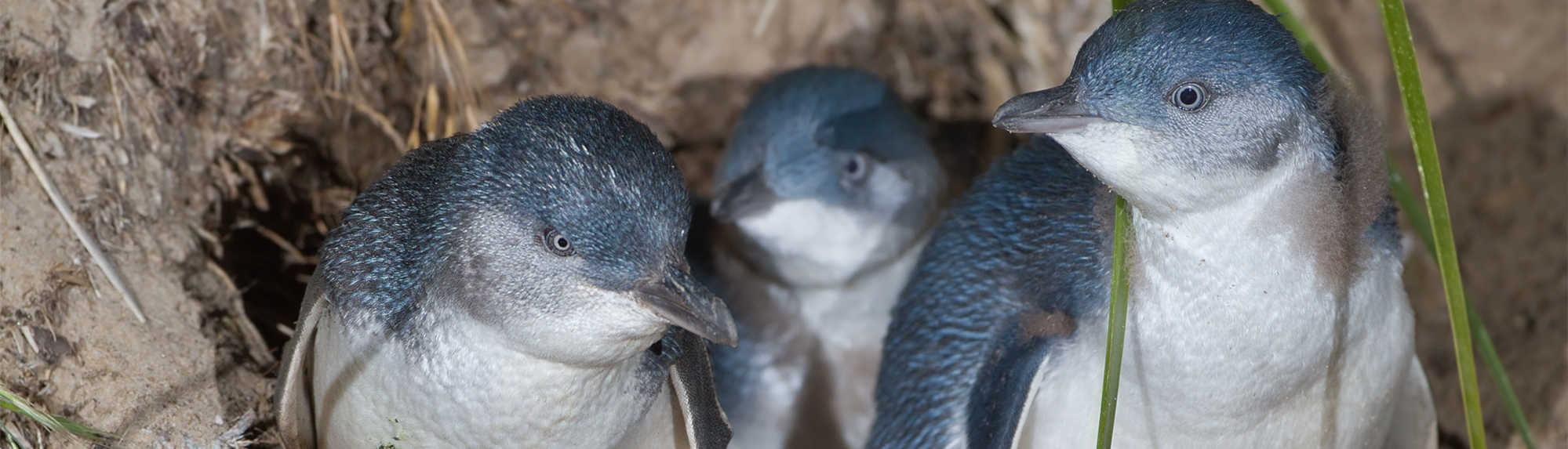 Can I Take Photos of the Penguins on Phillip Island?