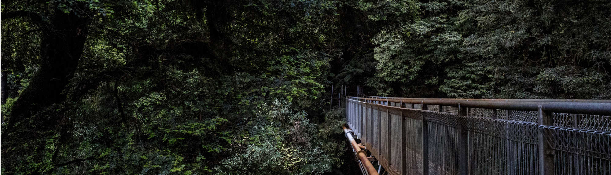 Why You Should Visit the Great Otway National Park
