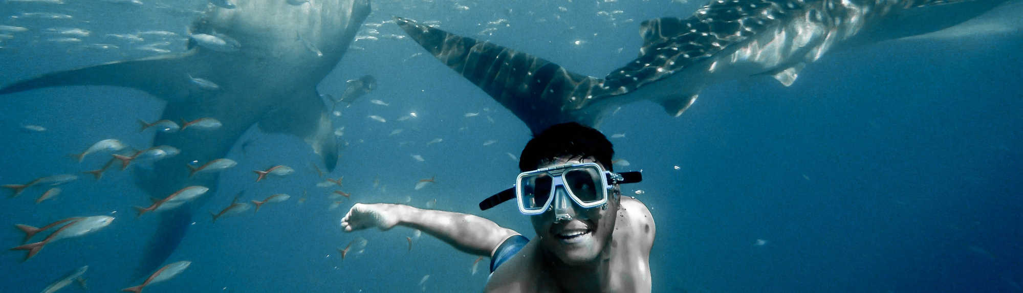 Where Can I Swim With Whale Sharks
