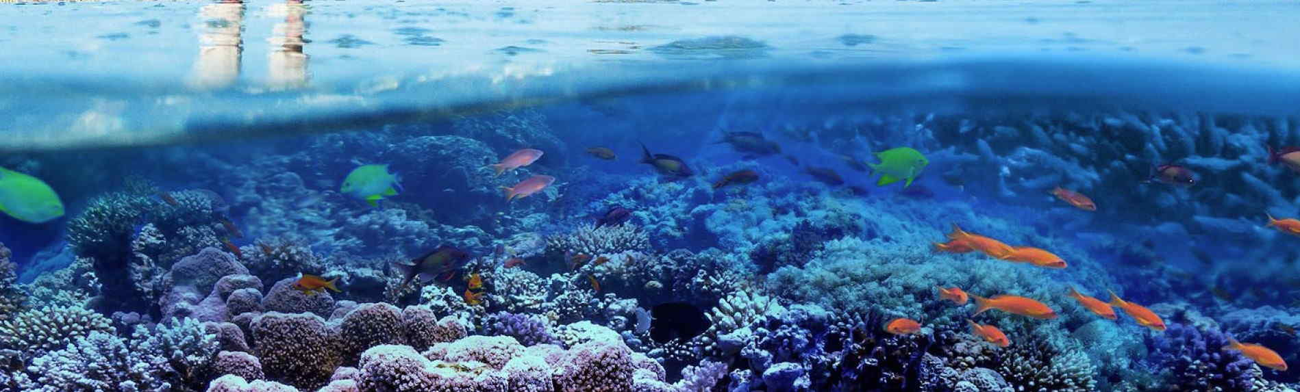 Explore the underwater world of the Great Barrier Reef from your own home!