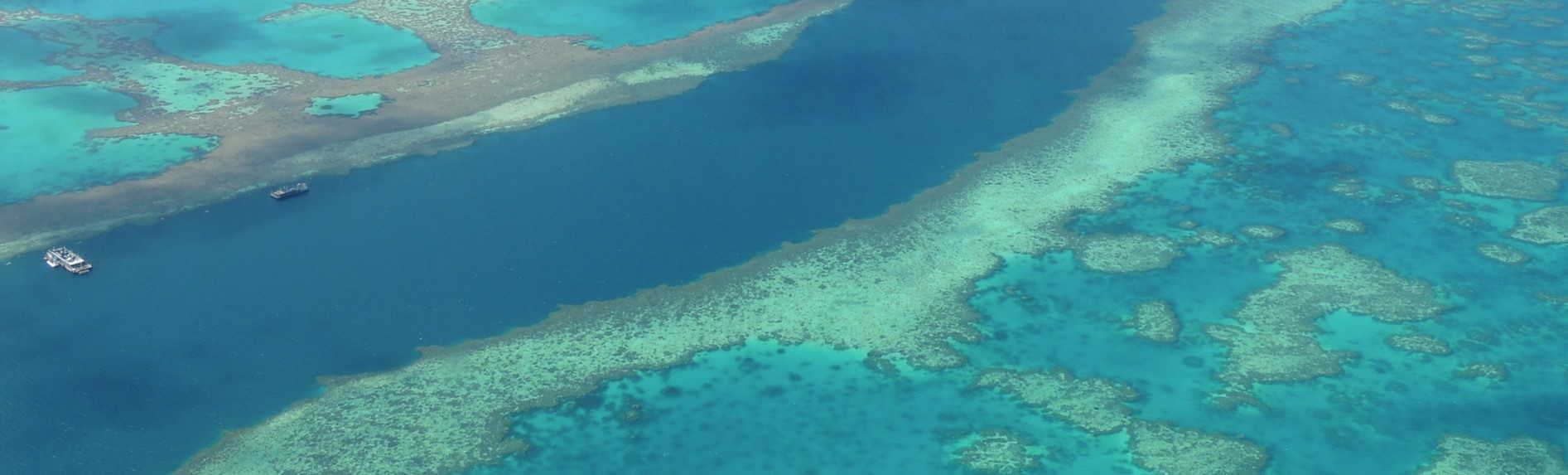 Great organisations saving the Great Barrier Reef!