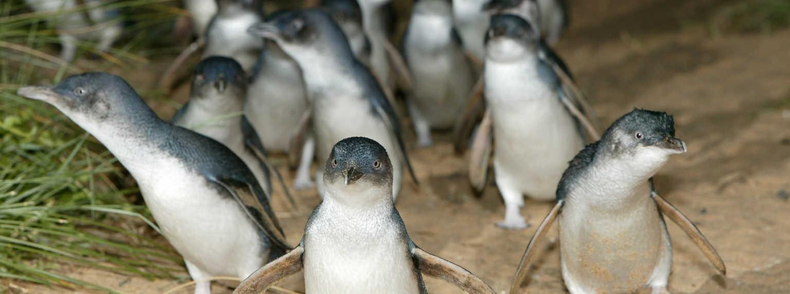 Penguin Burrow Camera