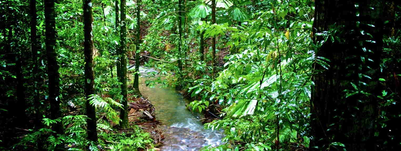Fruits of the Daintree
