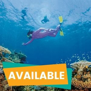 Great Barrier Reef Premium Snorkelling Tour