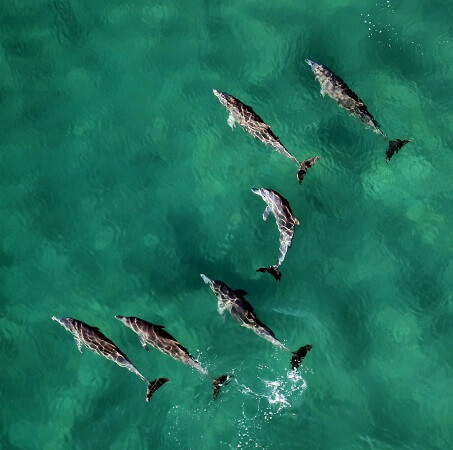When can you see dolphins at Tin Can Bay?