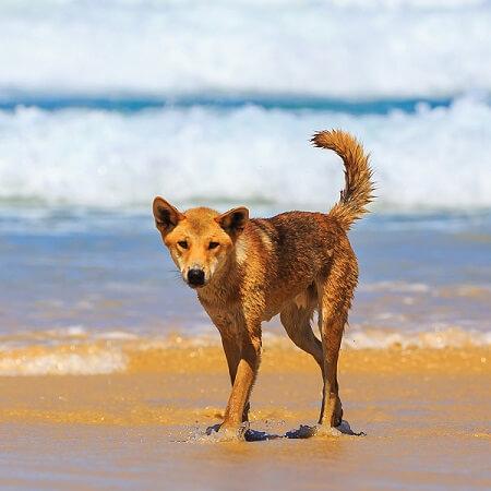 Is Fraser Island Dangerous?
