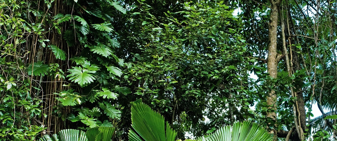 What is the biggest threat to the Daintree Rainforest?