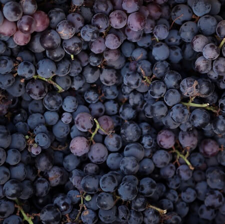 What types of grapes are grown in the Barossa Valley?
