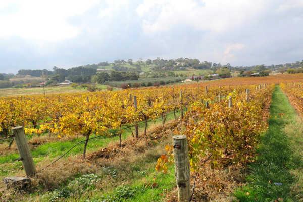 Barossa Valley Wines