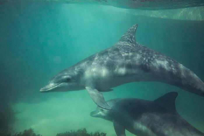 Dolphins in Australia