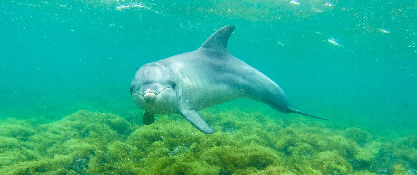 Can you swim with dolphins in Australia?