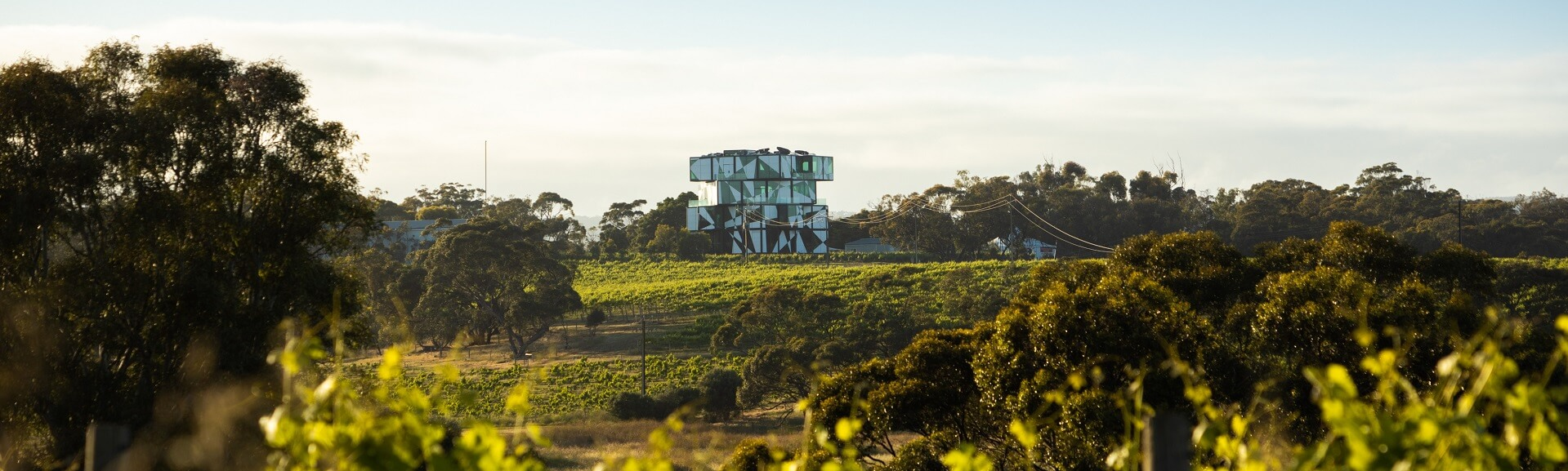 McLaren Vale Cube Tour with Lunch 2