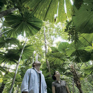 How is the Daintree rainforest being protected?