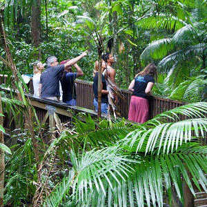 How Was the Daintree Rainforest Formed?