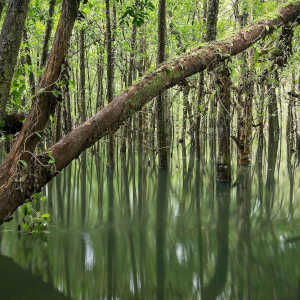 Why is the Daintree Rainforest Important?