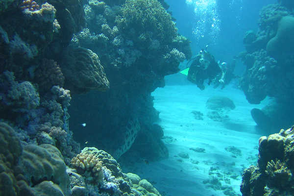 Great Barrier Reef Holiday