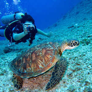 How Much Does it Cost to Visit the Great Barrier Reef?